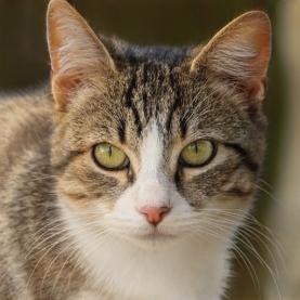 thiscat3
