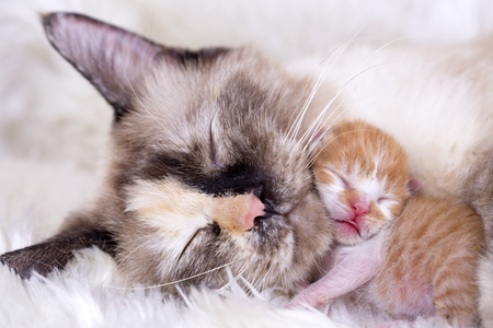 109113294-cute-kitten-baby-cat-and-mother-cat