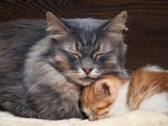 6-important-life-skills-that-mother-cats-teach-their-kittens-56b31aae33284