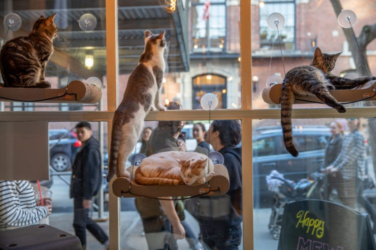 catcafebrooklyn