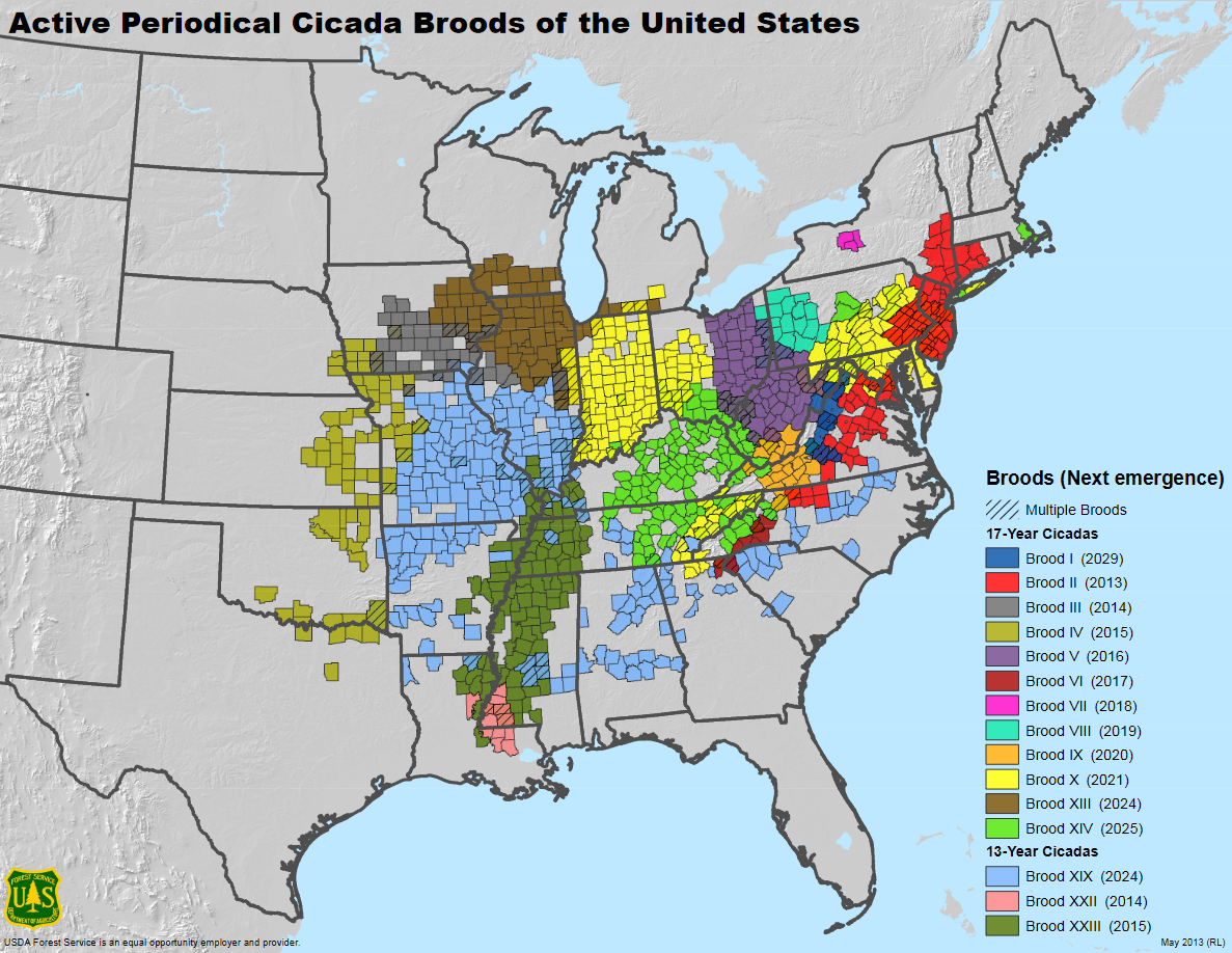 Screenshot 2021-06-15 at 05-34-19 Active Periodical Cicada Broods of the United States - CicadaBroodStaticMap pdf