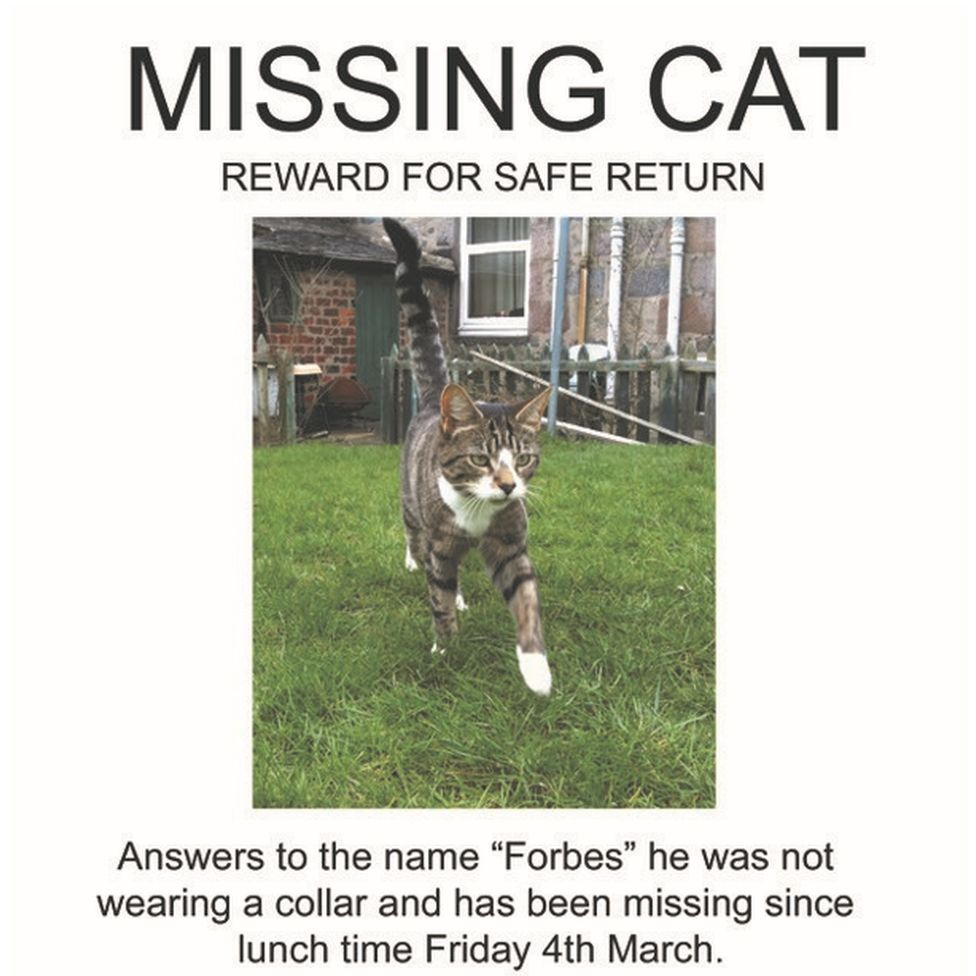 Forbes the cat's missing poster