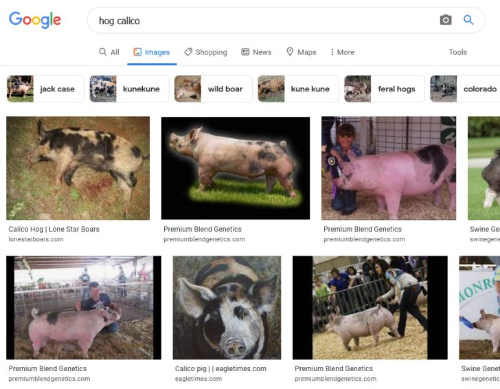 Screenshot 2021-09-03 at 09-29-28 hog calico - Google Search
