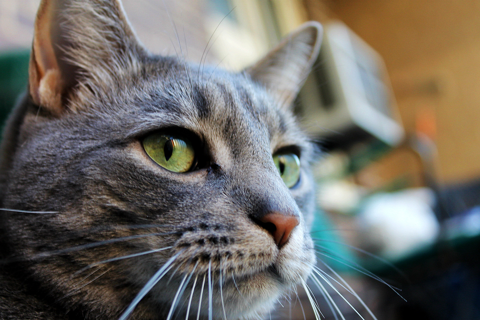 Buddy's Whiskers