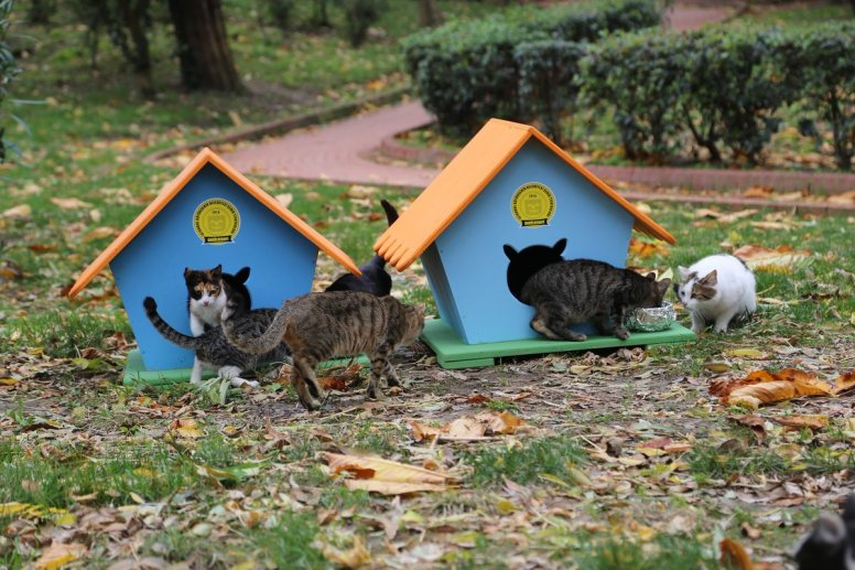 Istanbul cat houses