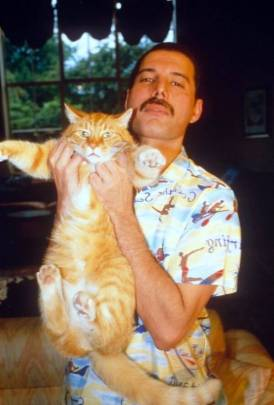 freddie-mercury-with-cat