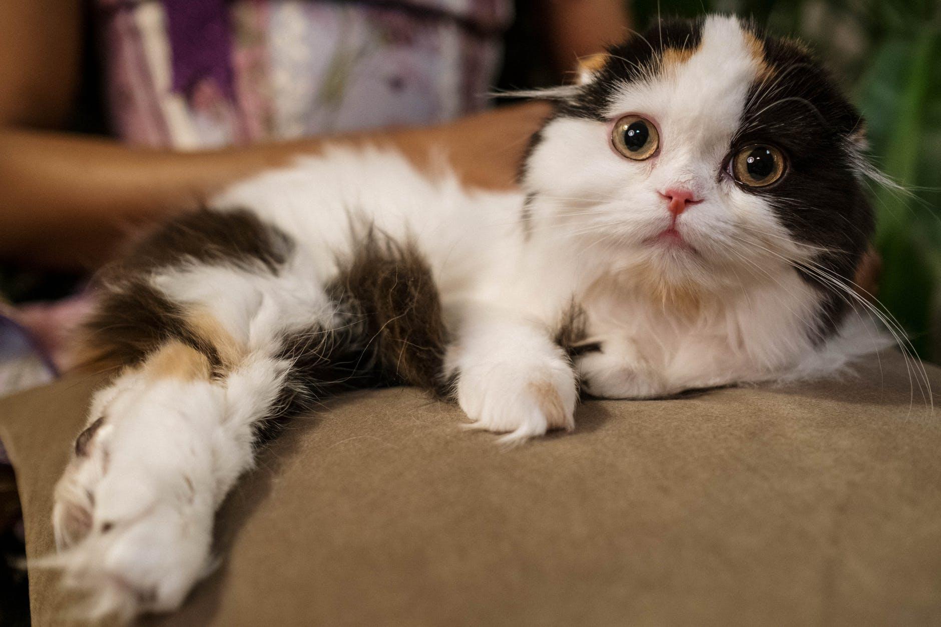 cute cat lying on pillow
