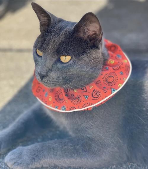 BirdBeSafe Collar