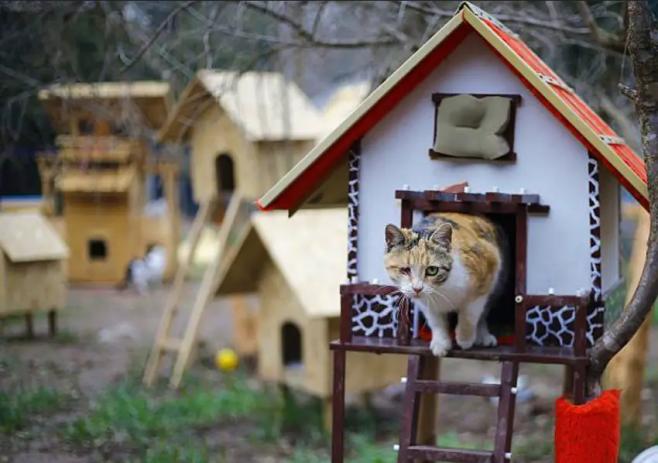 Cat house Turkey